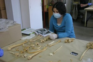 One of the anthropology students consults the Human Bone Book while working on a partial skeleton.