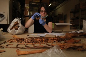 One of the anthropology students works at placing teeth back into the mandible (lower jaw) of the remains she is working with.